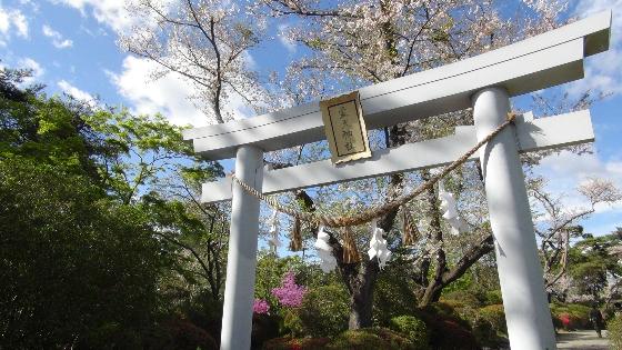 鳥居×桜画像
