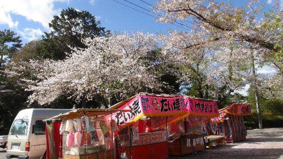 出店×桜画像