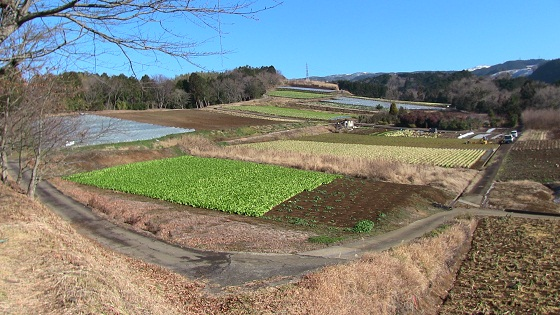 箱根山西麓の野菜畑