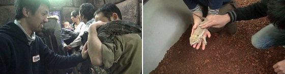 爬虫類に触れる体験