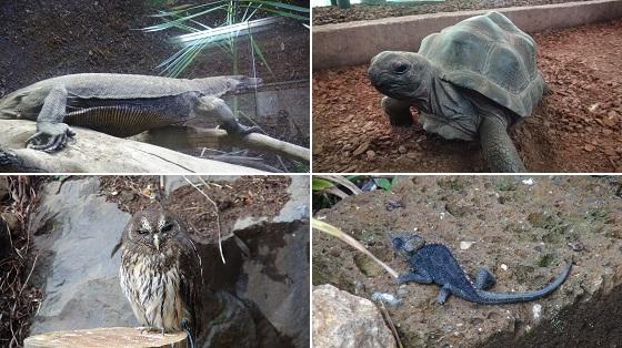 爬虫類などの生物写真