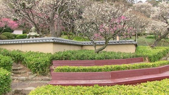 和の日本庭園