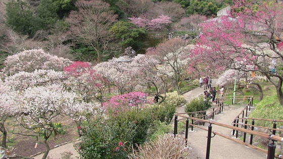 梅の花(4)