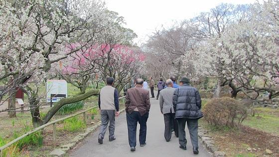 梅の花(7)