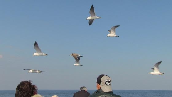 船についてくる鳥