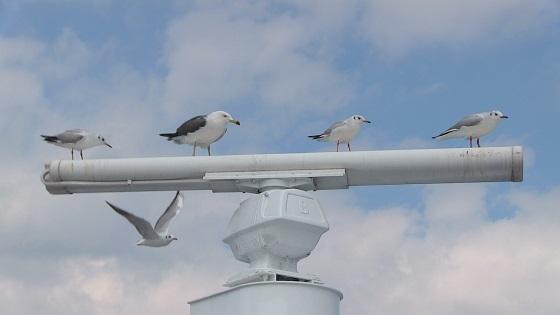 風圧にも負けない鳥