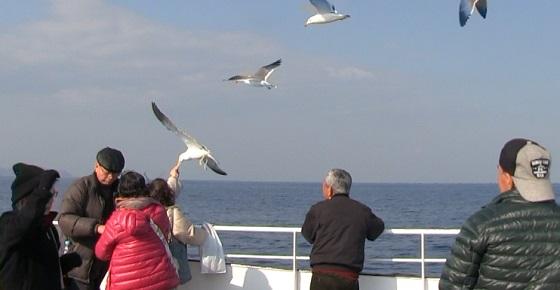 船に乗りながら鳥にエサあげ