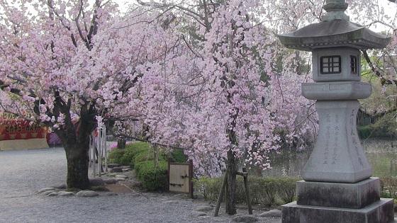 和風×桜(2)