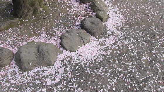 桜の花びら地面