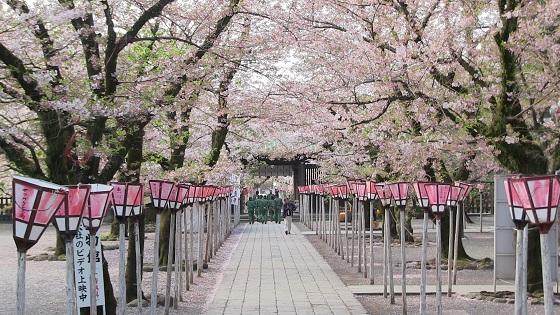 桜アーチ(1)
