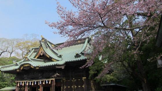 三嶋大社本殿×桜