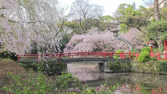 和風×桜(1)
