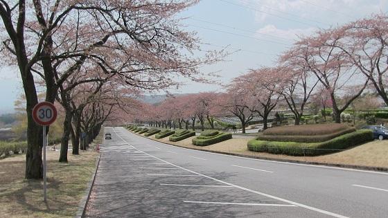 冨士霊園桜並木