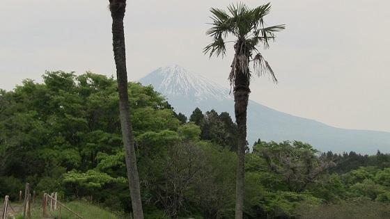 富士山(2)