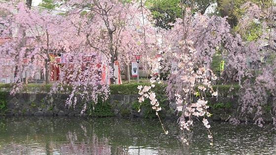 三嶋大社の池
