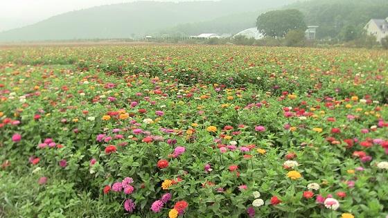 花の都公園の花(1)