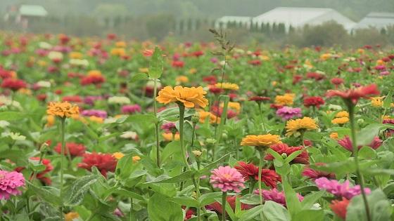花の都公園の花(2)