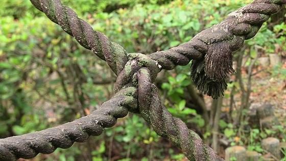 ロープ×コケ