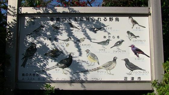 香貫山で主に見られる野鳥(看板)