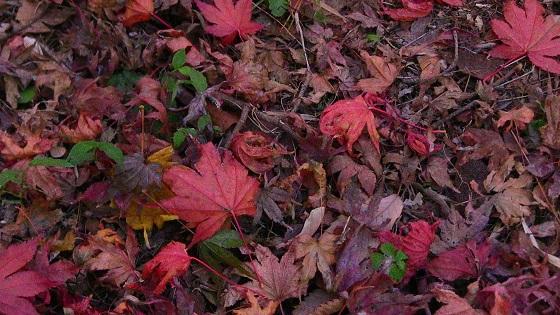 落ち葉の地面(2)