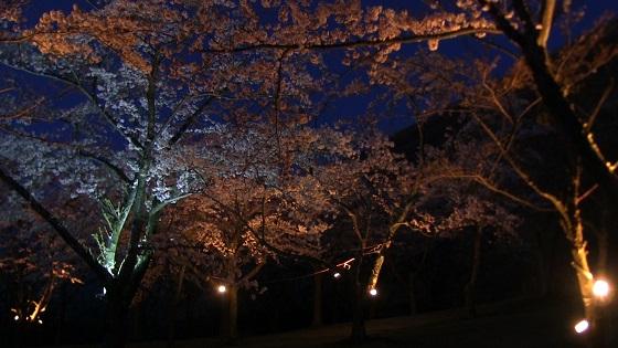さくらの里夜桜(ライトアップ)
