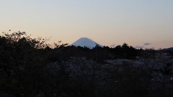富士山×桜(1)