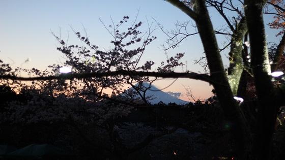 富士山×桜(2)