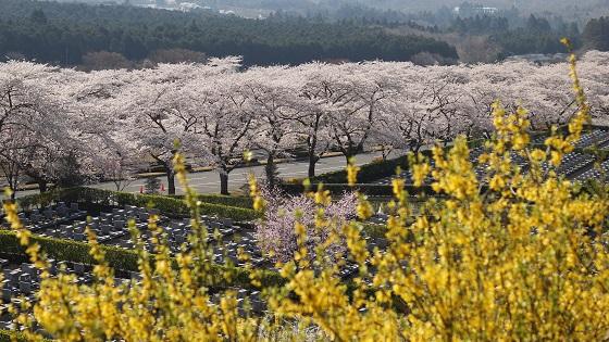 冨士霊園の景観