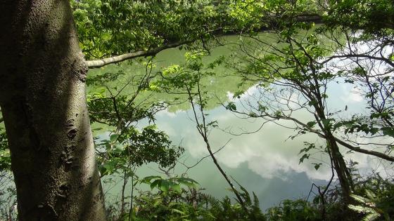 千鳥ヶ谷池画像(1)