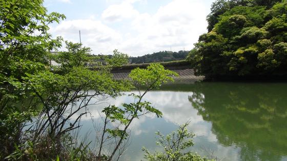 千鳥ヶ谷池画像(2)