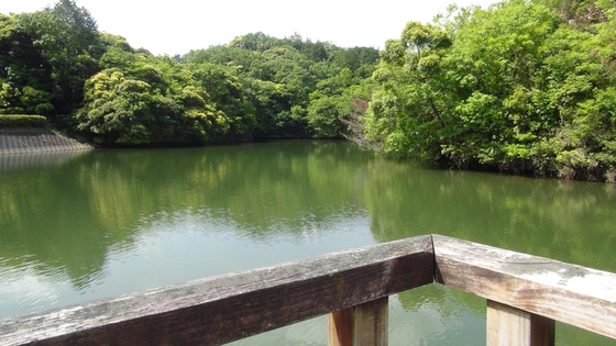 桟橋から見る池