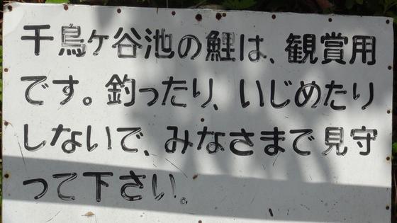 池の注意書き看板
