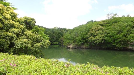 綺麗ではない池の水