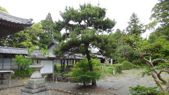 久延寺の松
