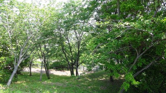 公園内の自然