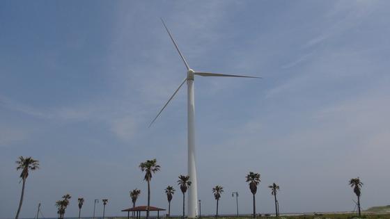 水力風車×ヤシの木