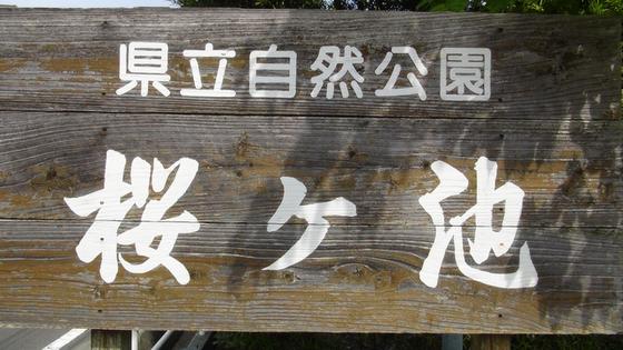 桜ヶ池看板