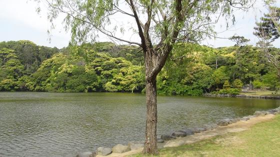桜ヶ池画像2