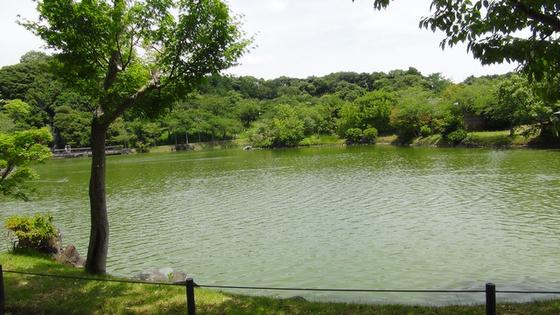 ゆりの園池2