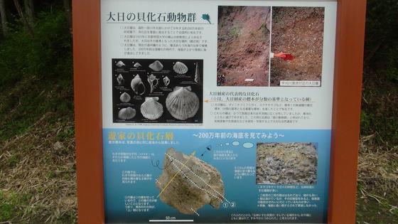貝化石看板