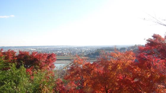 紅葉×展望台景色