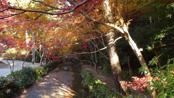 紅葉×川1