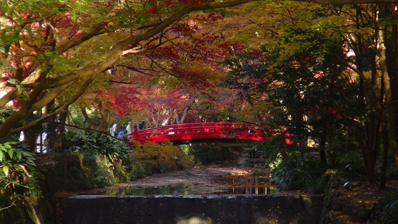 紅葉×赤い橋