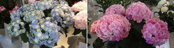 展示の花1