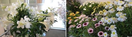 展示の花2